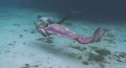Mermaid Swimming By MermaidMelissa