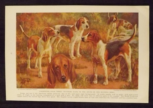 Foxhounds from Three Countries