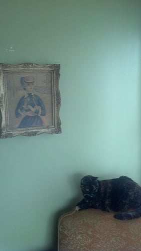 In addition to unparalleled ferocity, the cat nicely complements the environment of a culturally refined home.