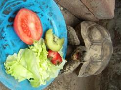 How long can tortoises live?