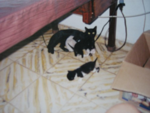 "Last but never least, Missie, my sweet, anxious, smart little ""midnight cat"" with kittens  How I miss them all"