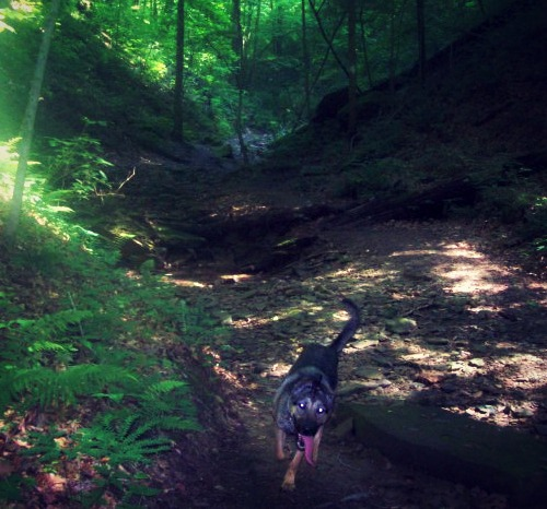Fiona trail running in Indiana.