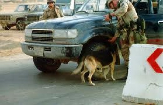 Jupiter searching a vehicle for IEDs in Saudi Arabia.