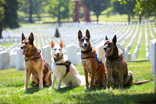 Recipients of the Military Working Dog Service Award.