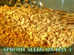 Soak the seeds for 8 to 12 hours after disinfecting them. Be sure to keep them in a very low-light location.