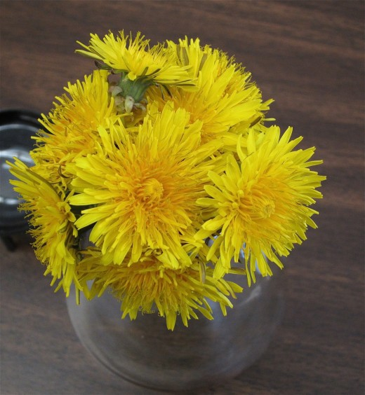 Biology and Math: Symmetry in Dandelions