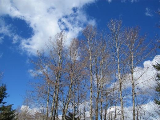 Math can be used to study the branching patterns of trees.