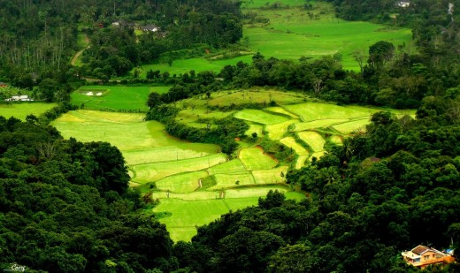 Kodagu also known as Coorg