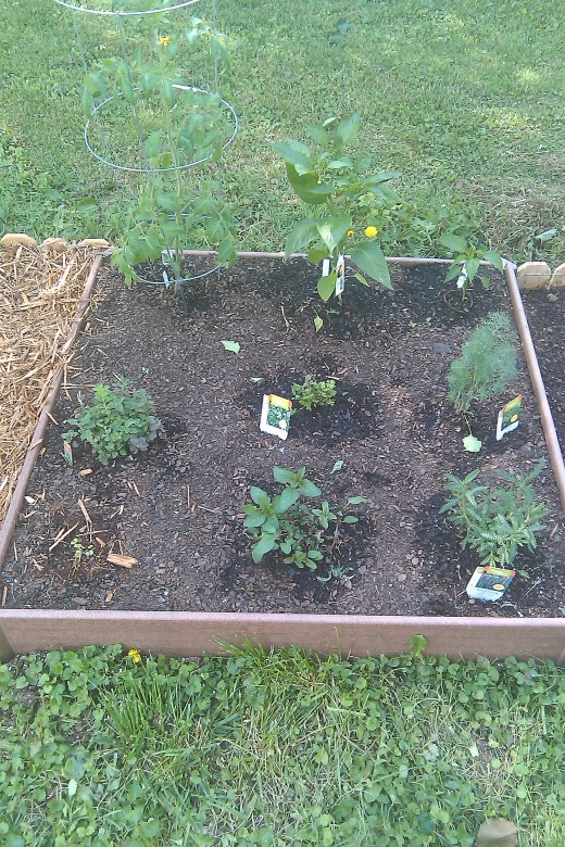 The herb bed with tomato & peppers