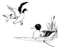 A (very convincing) duck...