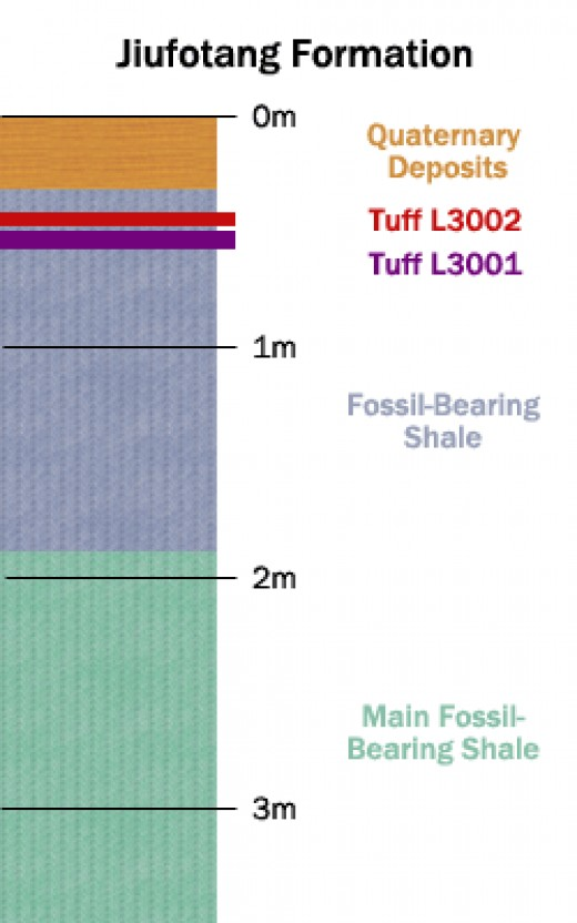 Illustration of the strata analyzed by He, et al. Argon-argon dating of volcanic ash deposits in Tuff L3002 and L3001 found them to be 120.3 million years old, give or take 700 thousand years.