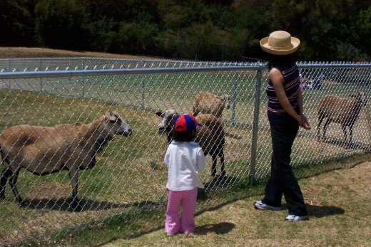 A Girl Visiting Animals