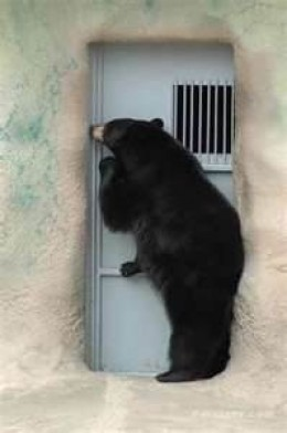 """Knock-knock. """"Who's there?"""" Your neighbor. Keep the noise down, I'm trying to hibernate."""