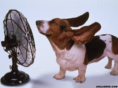 Invest in fans or an AC unit to keep your pup—and yourself—cool this summer.