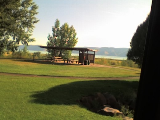 even picnic areas use grass to lure patrons
