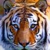 Goody5 profile image