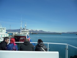 Whale Watching in Iceland's Flaxafloi Bay