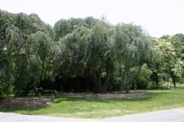 Arboretum shaded picnic area