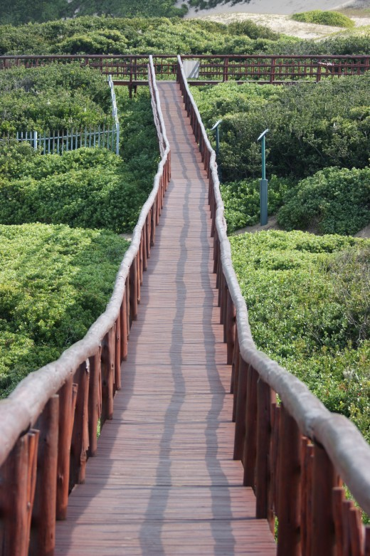 Part of the boardwalk At Nahoon Point Nature reserve