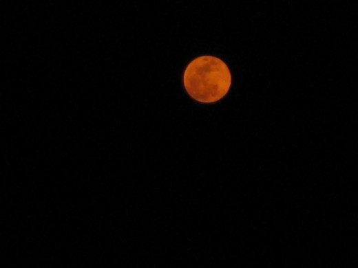 Rising orange moon in perigee - taken with my little Canon Supershot.
