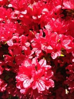 My Spring Gardening Hubs!