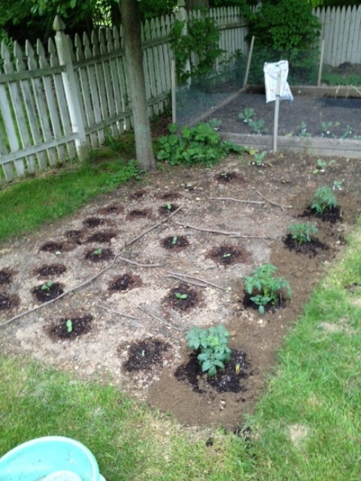 My victory garden as of May 21, 2012!