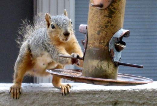 Squirrel has seeds for the taking...
