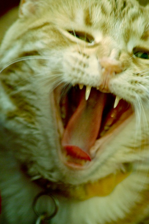 my cat yawning. weren't you scared, though?