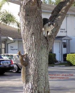 Squirrel and Cat up a Tree a Short Story