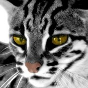 Liloz Musings profile image