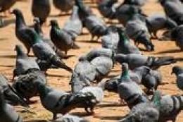 Feeding on bird seed
