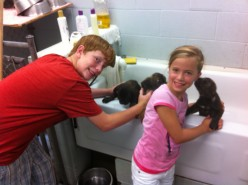 My kids bathing puppies that need a home.