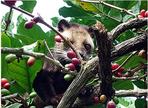 Caught nibbling on red berries~