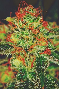 What is your experience with medical marijuana?
