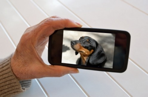 Ack, what if I take a photo of the dog and...
