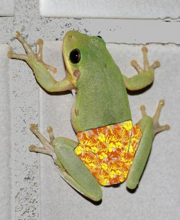 "This is what Google came up with when I typed in ""Frog Pants"" - I really wasn't brave enough to type in ""Frog Condom"""