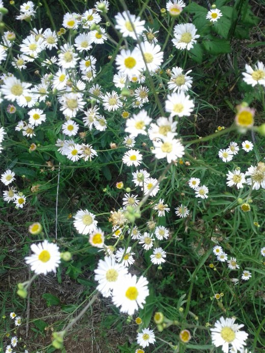 Buy wildflower seeds in mixed packets. Plant densely