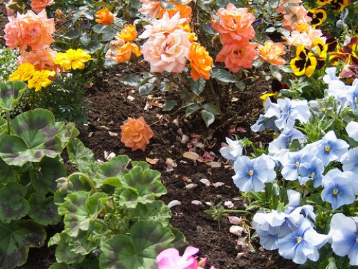 Mixed bed of flowers
