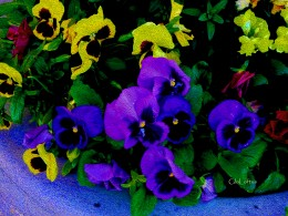 """Never be afraid to use bold, intense colors when using Photo Shop or the real thing (actual paint!)Flowers especially need to be dramatic and exciting to look at. as they have been """"done to death"""" as an object of art."""