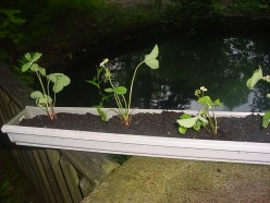 How to Make a Gutter Garden