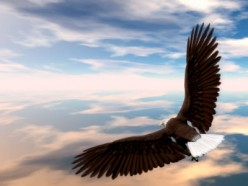 Soar on Wings Like Eagles