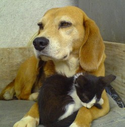 Cat and Dog Idioms (and Their Possible Origins)