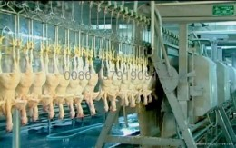 Even the slaughter of chickens has been mechanized. It likely takes a few workers to run this assembly line, whereas it used to take hundreds to process chickens for the table. This should reduce the cost per item, but it also creates a labor surplus