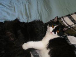 Cairo and Munchkin sharing love.