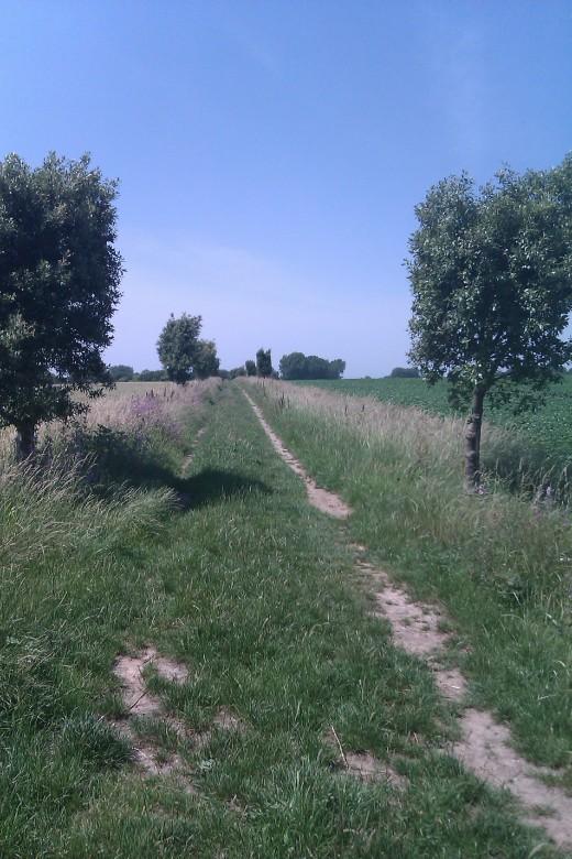 Well trodden footpath