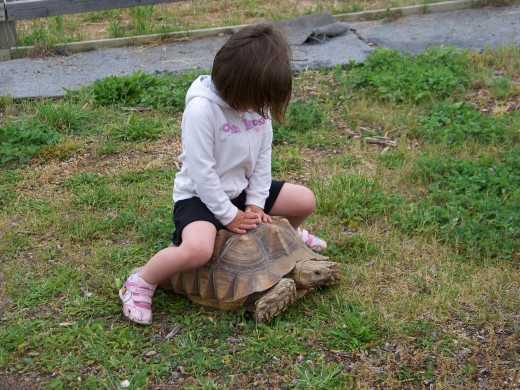 Little Ones Can Ride A Tortoise
