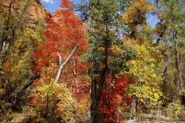 In the fall of the year the trees in the Red Rock Secret Mountain area look like they were painted by the hand of God.