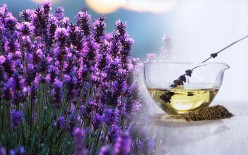 Lavender Oil and How It Can Help You