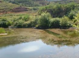Erjos pond. Photo by Steve Andrews