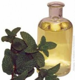 Peppermint Oil and How It Can Help You